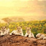 Africa Safari – Choosing The Right One